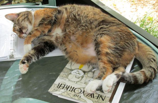 Fat Cat Sleeping