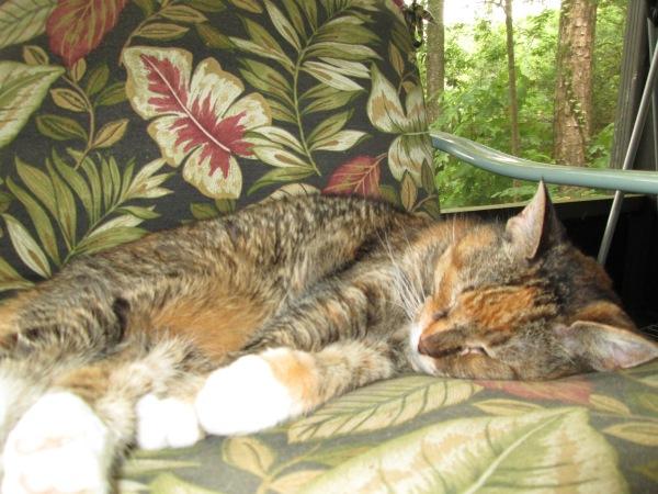 Luisa asleep on the porch