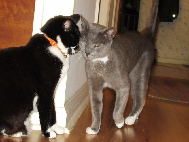 Somewhat gratuitous photo of cats: Maxine and Junior doing the head bump.