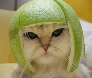 cat41_1