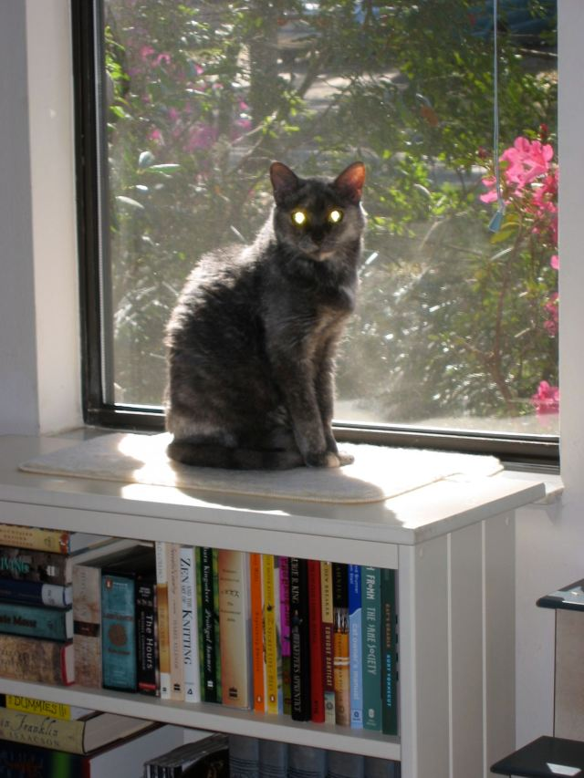 Elodea (RIP) posing on one of my smaller bookcases.