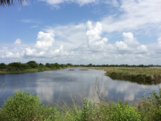 (1) Overlooking one of the many bayous at St. Marks National Wildlife Refuge