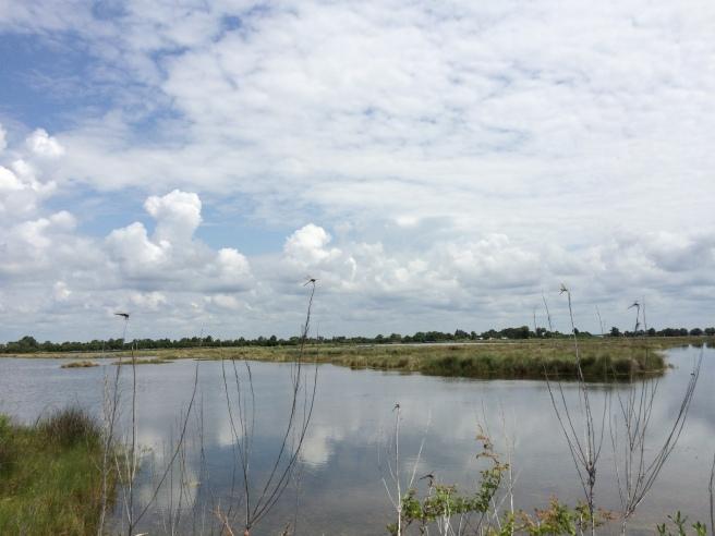 (2) Overlooking one of the many bayous at St. Marks National Wildlife Refuge