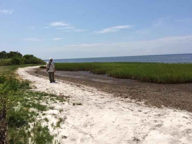 "The ""beach"" at St. Marks National Wildlife Refuge"