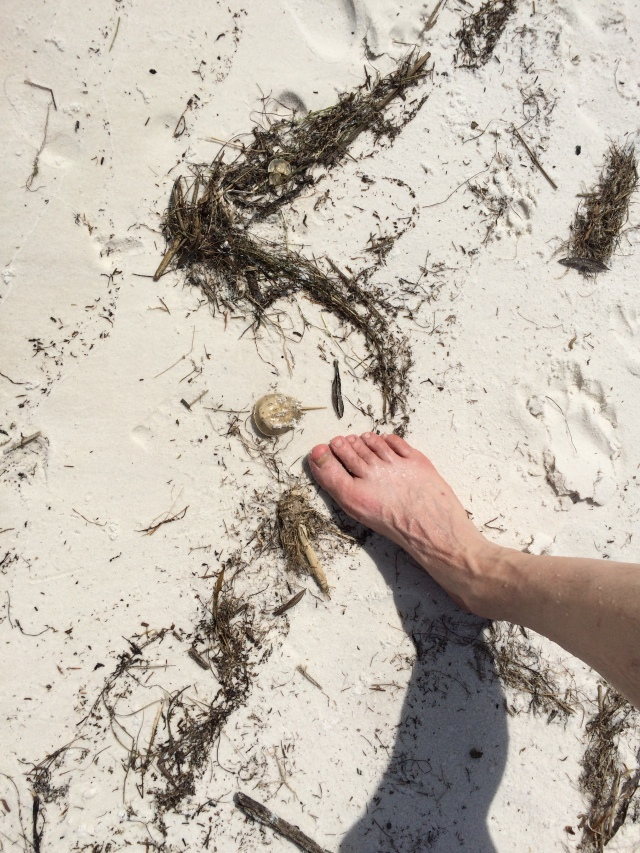 And with my husband's foot for perspective :-)