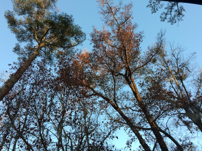 Trees in late afternoon light.
