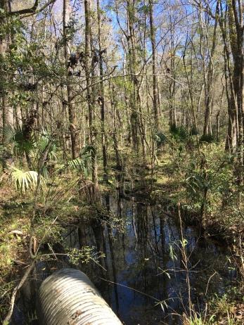More swamp.